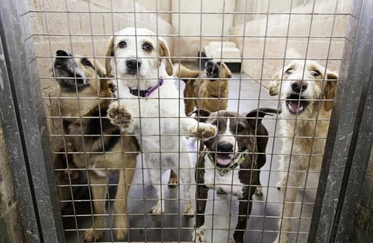 river 89 730x476 - Number of dogs being 'put down' by pounds falls by 40%